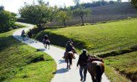 Maneggio ed equitazione